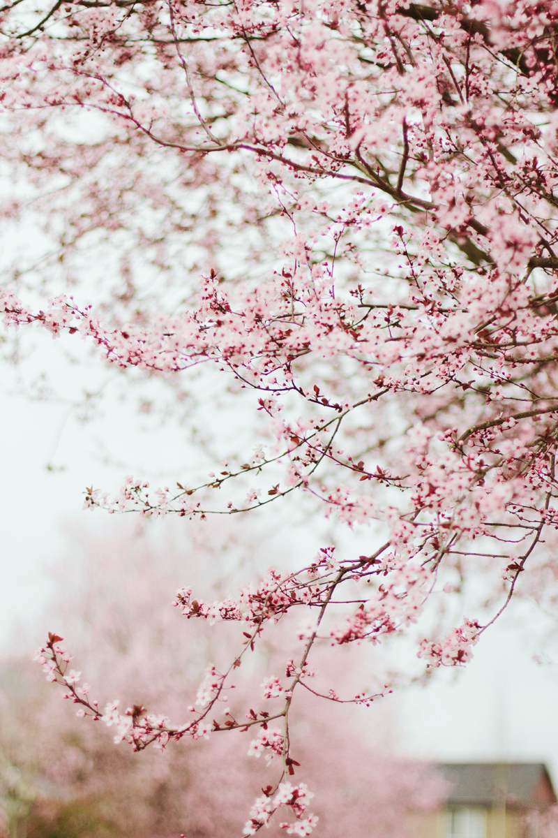 spring blossoms captured by Anastasia Marie